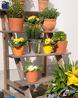 Blumenbank Ratgeber: Welche Blumenbank kaufen und bestellen?